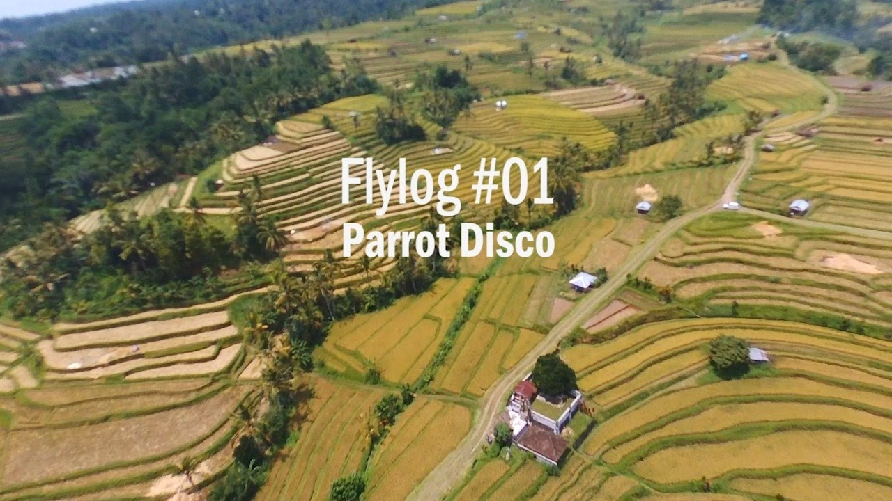 FLYLOG #01  PARROT DISCO @Jatiluwih Tabanan Bali