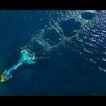 Real Life Mermaid Melissa Caught On Flying Drone Footage